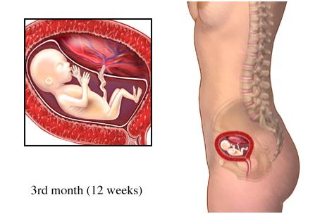 39 неделя беременности болит лоно